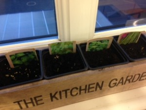 Our seeds have germinated and are looking good.